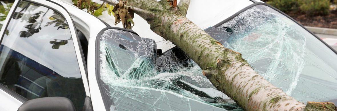 дерево упало на автомобиль